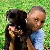 4-H Dog Projects, dog obedience