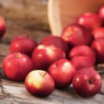 Apple Pruning Clinic