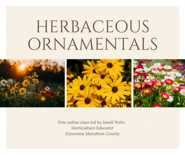 Herbaceous Ornamentals Logo. Pink background, with three images of flowers in the center. Bottom states it is an online program by Janell Wehr, Horticulture Educator
