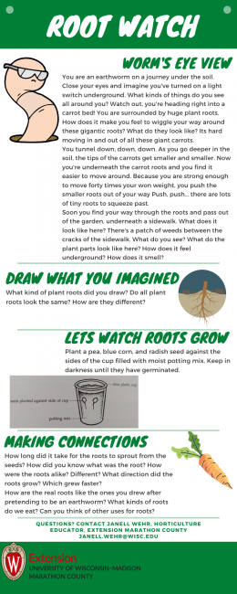 Root Watch Infographic. First there is a short story describing the view from a worm's point of view. The learner is encouraged to draw what they imagined. Next are directions to grow 3 seeds in a clear cup. Finally, learners are asked a series of questions based on their observations.