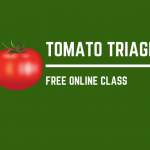 Tomato on left side. Text says: Tomato Triage! A free online class. On green background.