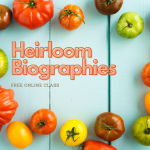 Text: Heirloom Biographies Free Online Class. Background is tomatoes in many colors on blue wooden boards