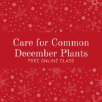 Text says Care for Common December Plants Free Online Class. Text is white on red background with white snowflakes.