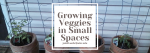 Tomatoes growing in buckets; Text: Growing veggies in small spaces